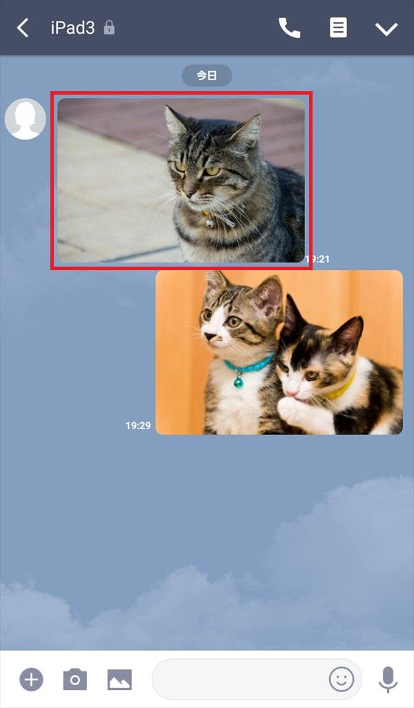 LINE_トークルーム_写真_猫