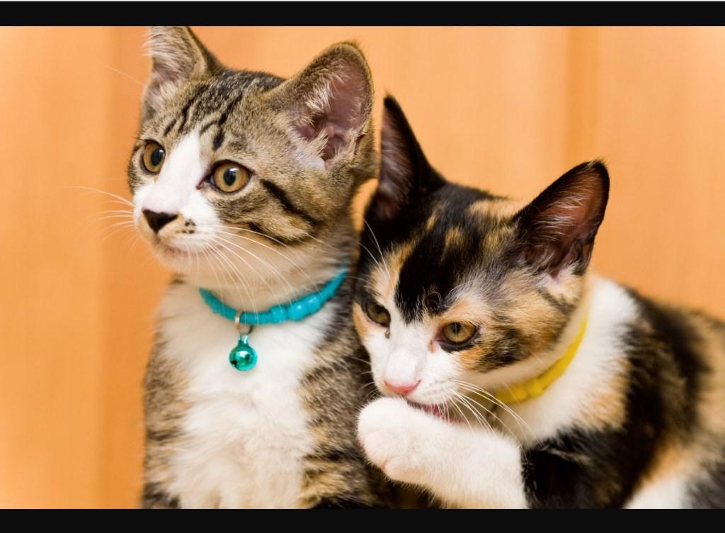 Web版Twitter_新しいタブで画像を開く_猫