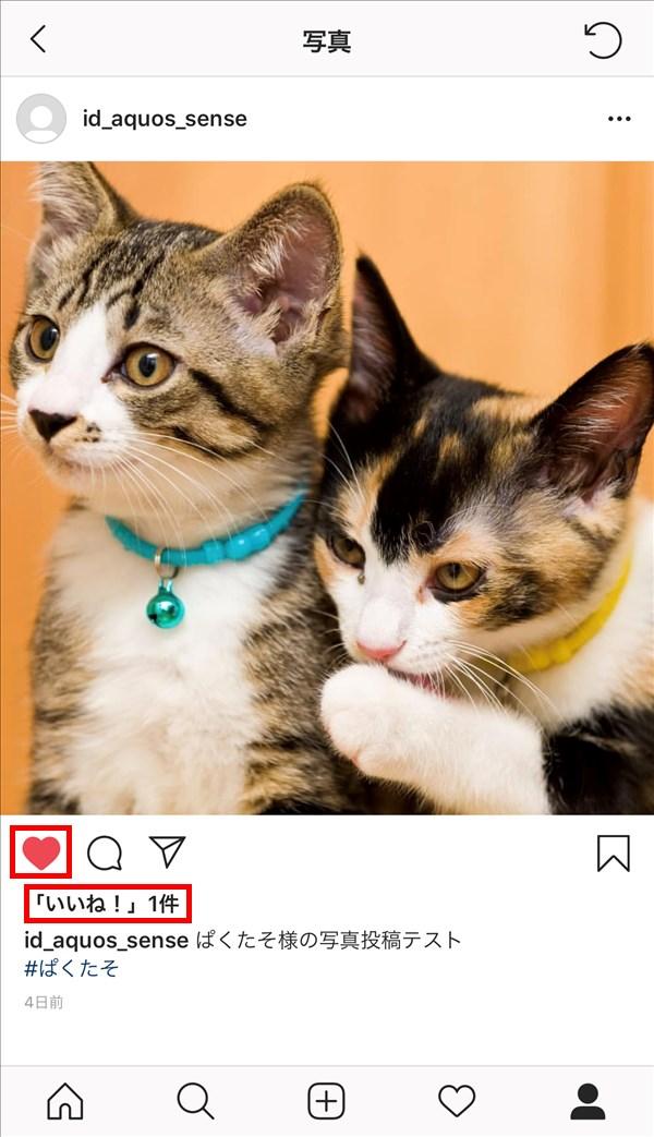 インスタグラム_猫_いいね